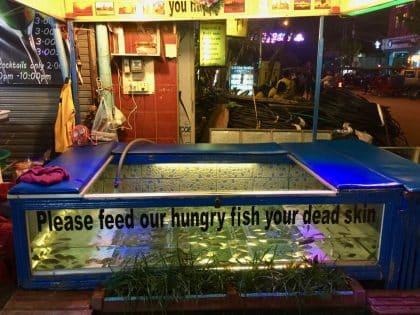 Fun fact de Siem Reap, Fish Pedicure, Camboja