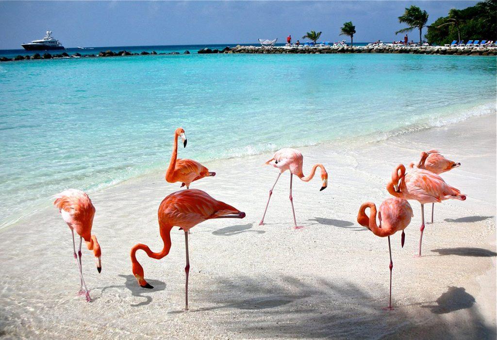 Island With Flamingo Beach